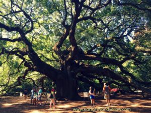 Angel Oak in South Carolina